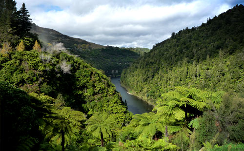 Tour of New Zealand Whanganui River