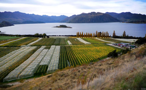 The Tour of New Zealand - Lake Wanaka