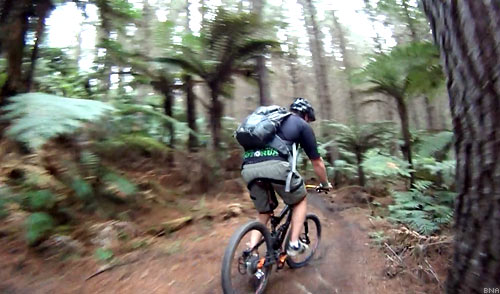 Mountain biking through the ferns