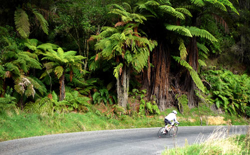Tour of New Zealand Ferns of Pipriki